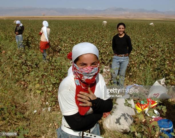 Kurdish farmers work in a cottonfield near Habur border gate to Iraq on October 25 2007 in Sirnak Turkey Turkish forces said they repelled a Kurdish...