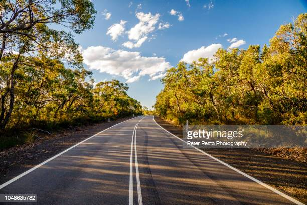 ku-ring-gai chase national park - national park stock pictures, royalty-free photos & images