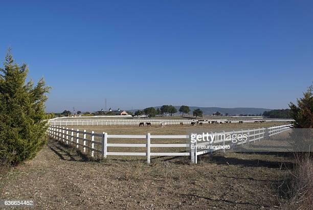 kurtel horse ranch view from the road in izmir. - emreturanphoto stock-fotos und bilder