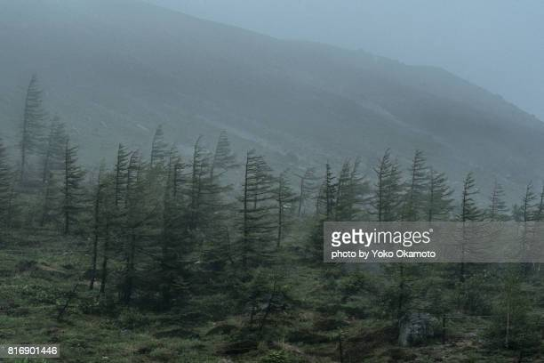 kusatsu shirane mountains blurred by heavy rain - gale stock photos and pictures