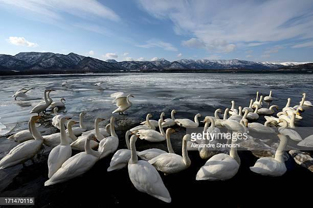 Kussharo Lake - Hokkaido