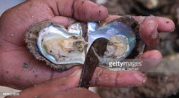 Kuwaiti divers look for pearls in shells they picked during the annual pearl diving season on August 11 2015 off the port of Khairan 100 kilometres...