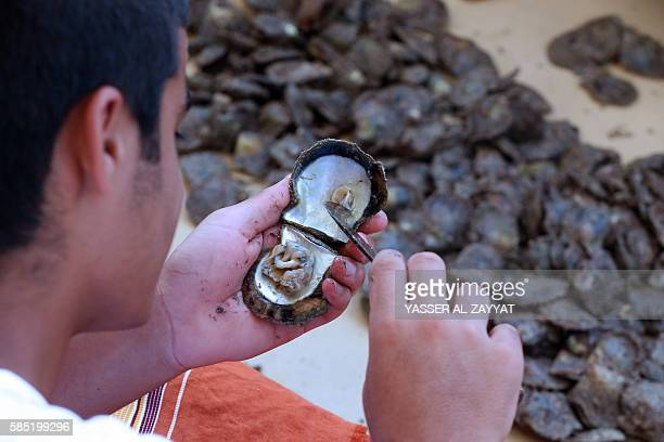 A Kuwaiti looks for a pearl in a shell that divers picked from the sea during the annual pearl diving season on August 2 2016 off the coast of the...