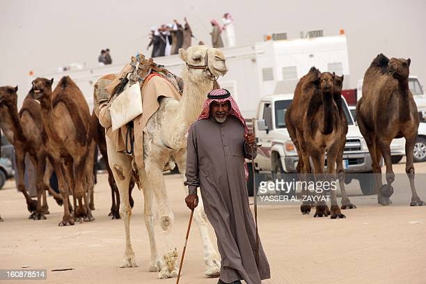 A Kuwaiti man stand leads a flock of camels during a competition in alSalmi district a desert area 120 kms west of Kuwait City on February 7 held as...