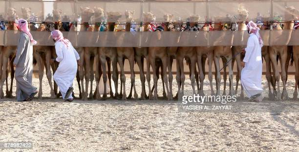 TOPSHOT Kuwaiti men check the starting position of camels ahead of a camel race at a club in the town of Kabd in the Jahra governante on November 25...