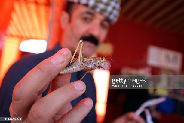 A Kuwaiti vendor shows a locust sold as food at a market in Kuwait City on February 21 2019