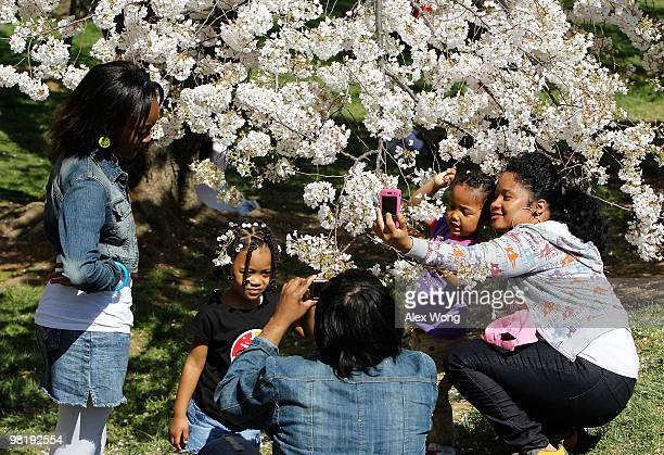 Kyechia McDougall of College Park Maryland takes a picture with her daughter Kayla Smith while she enjoys cherry trees in their full bloom with her...