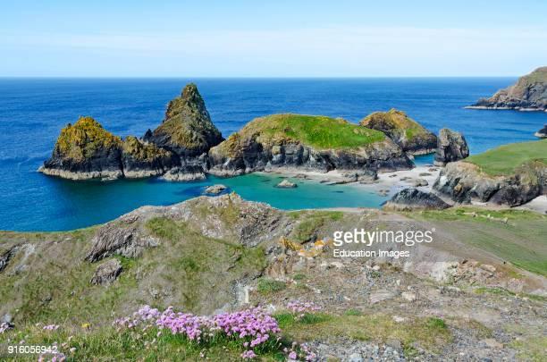 Kynance Cove On The Lizard Peninsular In Cornwall England Britain Uk