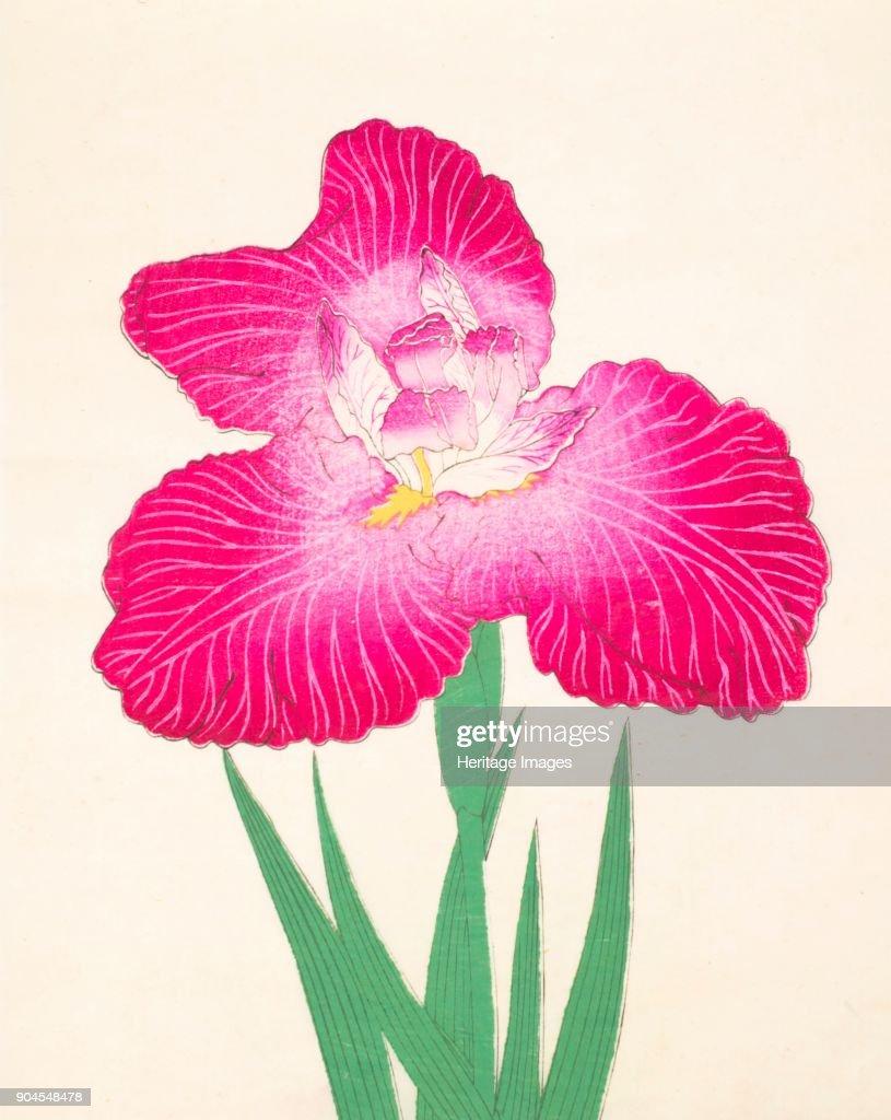 Kyo Kanoko No 24 1890 Colour Woodblock Print From