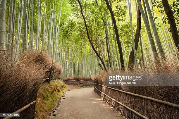 kyoto bamboo groove - nun stock-fotos und bilder