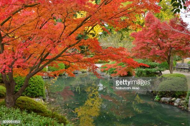 Kyoto is rich with many beautiful gardens which attract many tourists and visitors This is autumn color scene taken at Toji Temple located in the...