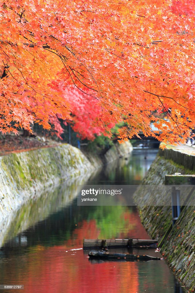 Kyoto, Japan at Philosopher's path in the autumn : Stock Photo