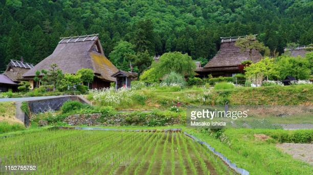 kyoto miyama village in early summer -rice field and traditional thatched roof houses - 五月 ストックフォトと画像