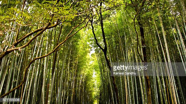 Kyoto's famous Bamboo walk path in Arashiyama area