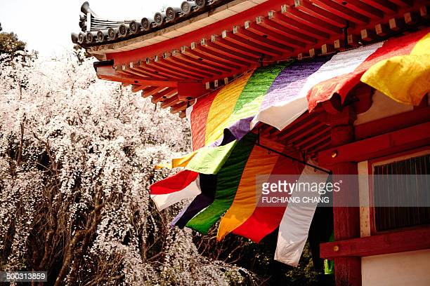 Kyoto's Japanese temple in springtime. Sakura blossom with the Buddhist flag formed an image of ancient story.