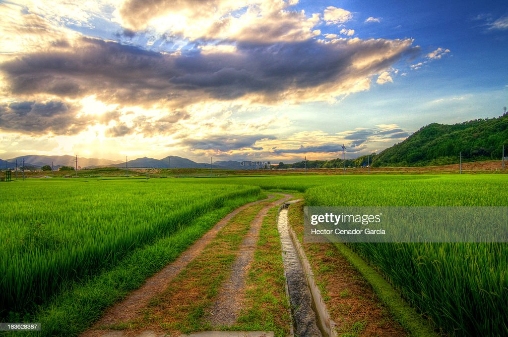 kyotos paths ストックフォト getty images