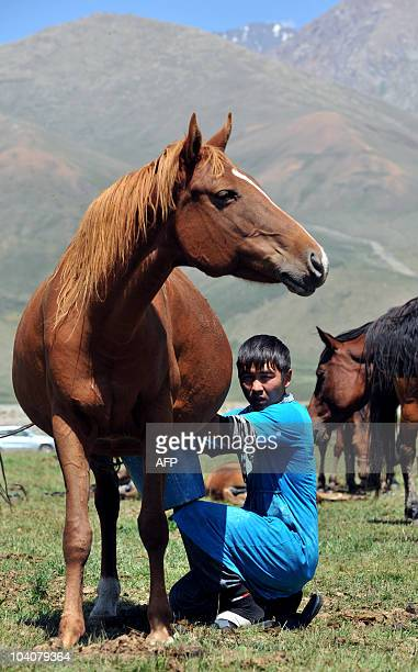 Kyrgyz man milks a mare on the Suu-Samyr plateau, 2.500m above the sea level, located on the ancient Great Silk Road from Bishkek to Osh on August...