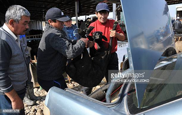 Kyrgyz men put a sheep into the car's boot after they bought it at the outdoors livestock market in Bishkek on October 3 2014 on the eve of the...