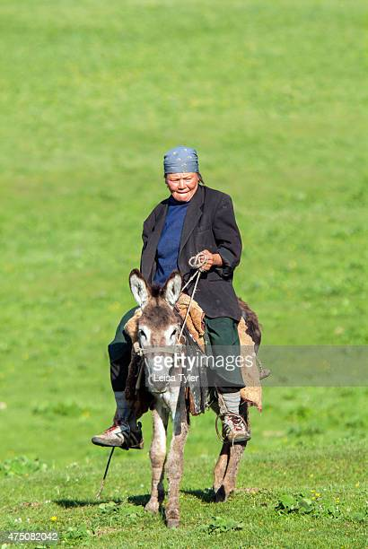 Kyrgyz shepherd rides a donkey to check on her sheep herd in the grasslands of central Kyrgyzstan Each summer Kyrgyzstan's semi nomadic shepherds...