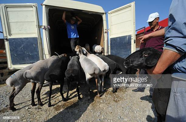 Kyrgyz vendors wait to sell their sheep at the outdoors livestock market in Bishkek on September 23 2015 on the eve of the Muslim Eid alAdha festival...