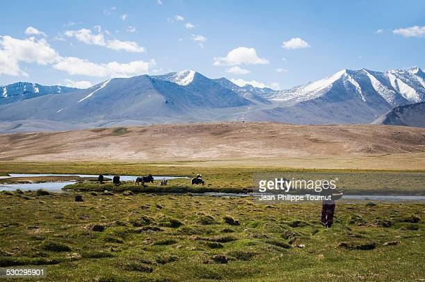 Kyrgyz woman going to milk yacks in the Pamirs