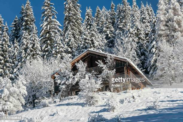 mountain chalet and pine trees covered in snow