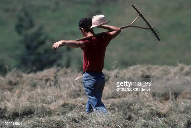 A la découverte du Cantal région AuvergneRhôneAlpes aoûtseptembre 1991 A Thiezac un paysan marchant dans un pré lors du fanage