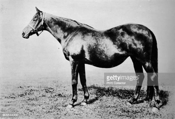 'La Fleche' 1911 La Fleche was a British Thoroughbred racehorse and broodmare From British Sports and Sportsmen Part 1 [British Sports and Sportsmen...