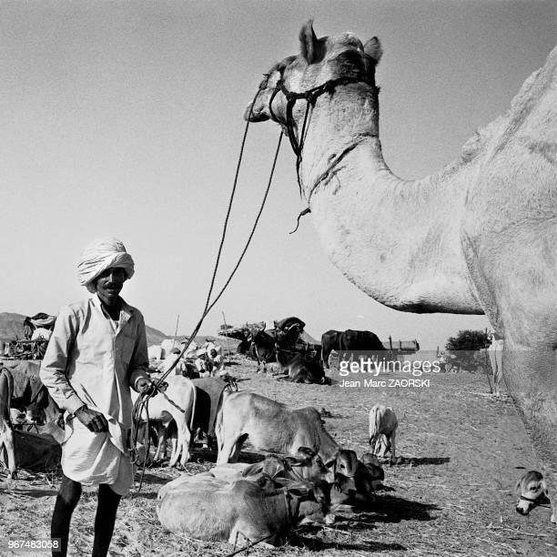 La foire aux chameaux qui se déroule chaque année au mois doctobre ou novembre en fonction du calendrier lunaire hindou dans cette petite ville du...