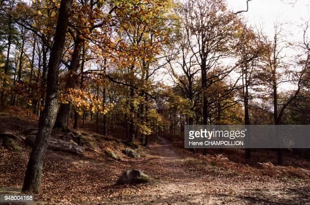 La forêt de Rambouillet, en octobre 1994, dans les Yvelines, France.