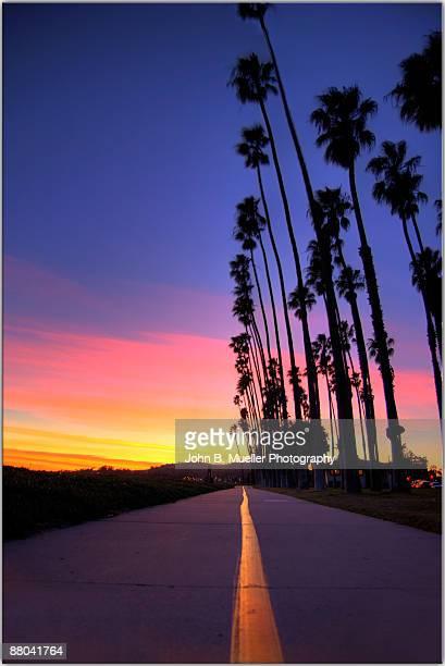 la gomera, silhouette of palm tree on coastal high - santa barbara foto e immagini stock