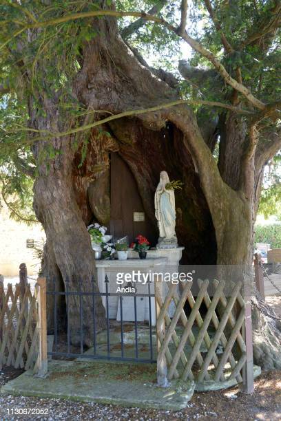the 'Ifs Chapelles chapel with thousandyearold yews in the Boucles de la Seine Normande Regional Nature Reserve Chapel dedicated to SainteAnne and...