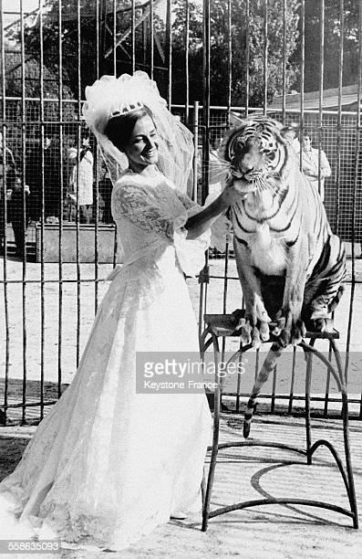 La jeune mariée en robe blanche Mary Chipperfield dompteuse de tigre et fille d'un propriétaire de zoo avec son jeune ami le tigre Suky le 12 octobre...