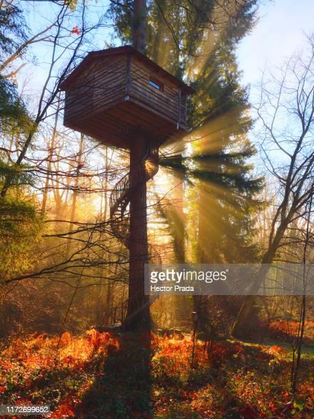 la magia del bosque - ビトリア=ガステイス ストックフォトと画像