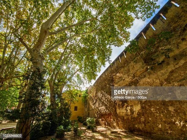 la muralla en el jardin - muralla stock photos and pictures