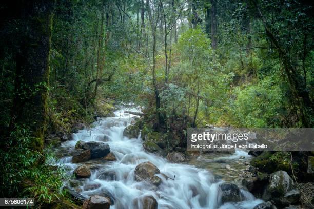 la novia creek surround by lush temperated rain forest in peulla. long exposure capture. - プリシュティナ ストックフォトと画像