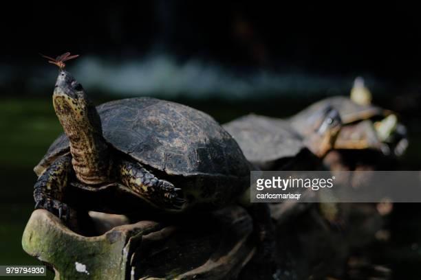 la paz ciencia con la poca espera (la tortuga y la libelula)