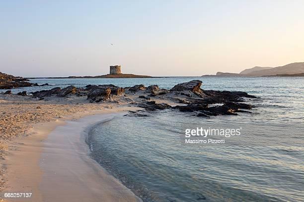 la pelosa beach and tower, sardinia - massimo pizzotti foto e immagini stock