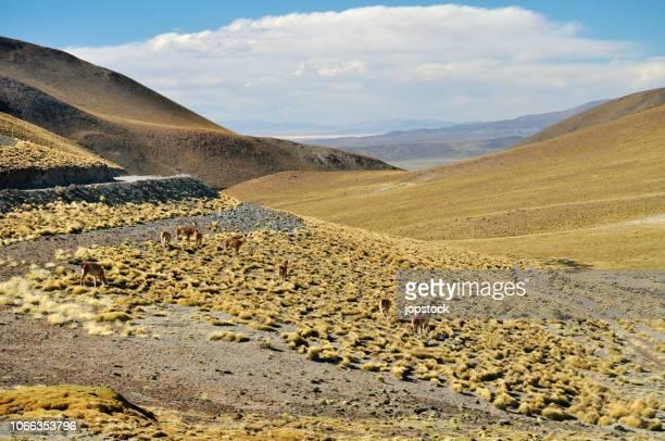 la puna desert in salta province, argentina - サルタ州 ストックフォトと画像