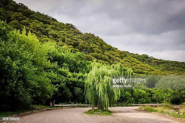 la quebrada, tree on hillside near wate - andres ruffo stockfoto's en -beelden