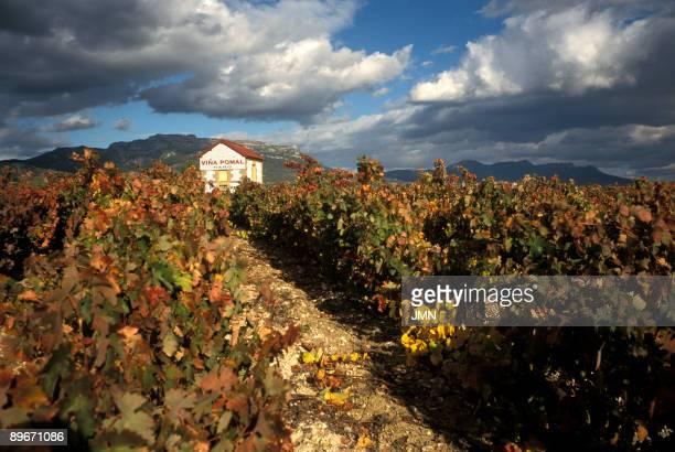 La Rioja Vineyards landscape near Haro