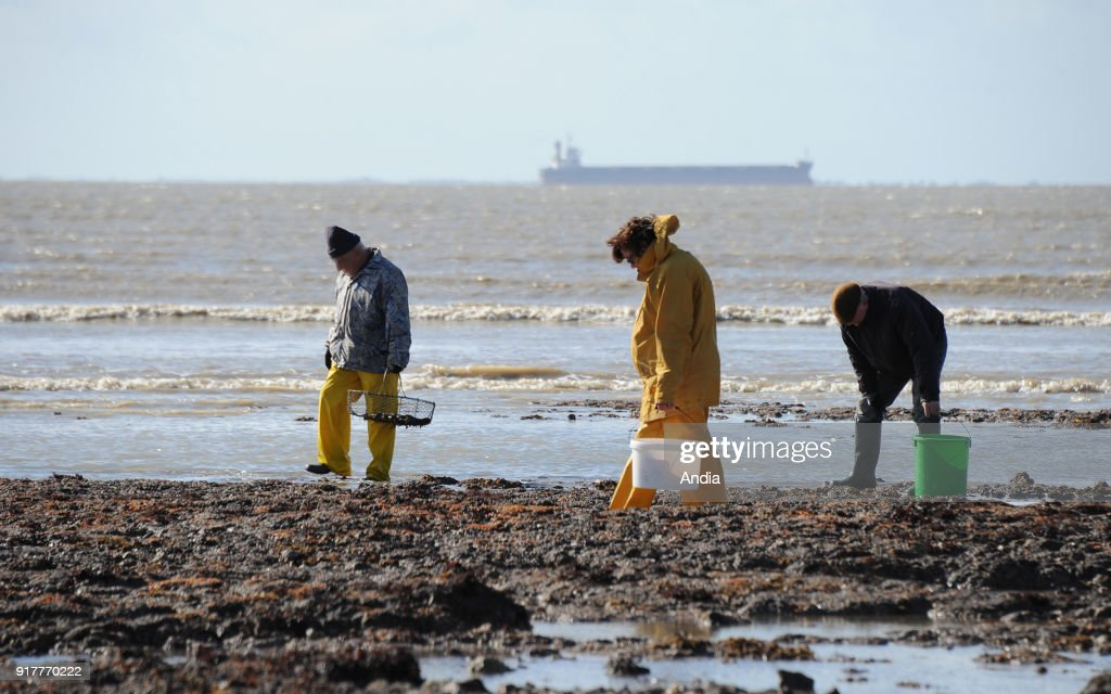 fishing from the shore during the spring tide on . Three persons gathering shellfish and merchant ship far off.