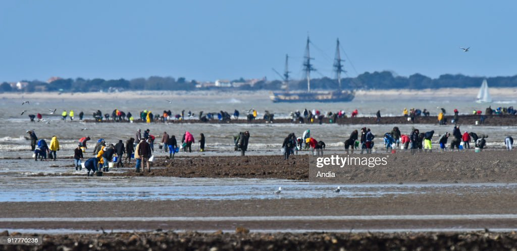 fishing from the shore during the spring tide on . Shellfish gatherers with the Hermione frigate in the background.