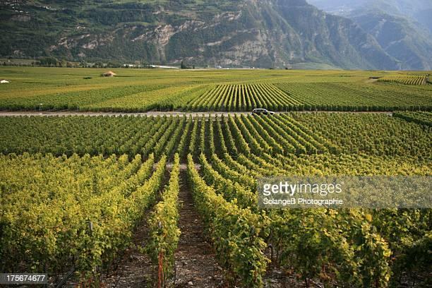 la route du vin - the wine road - car vin stock photos and pictures