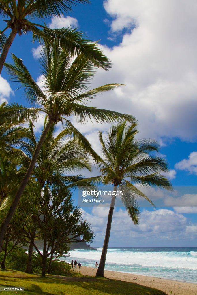 La Réunion, La Grande Anse : Stock Photo