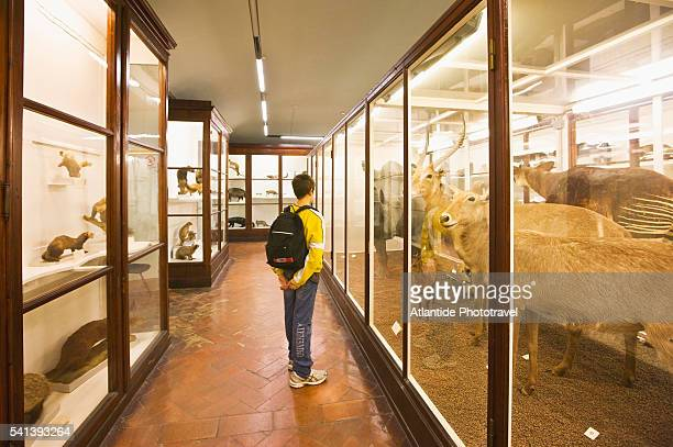 la specola zoological museum exhibits in florence - natural history museum stock pictures, royalty-free photos & images