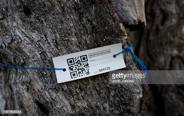 A label with a QR code is tied to an olive tree sign reads Adopt an olive tree in an olive grove in Oliete northeastern Spain on December 17 2018...