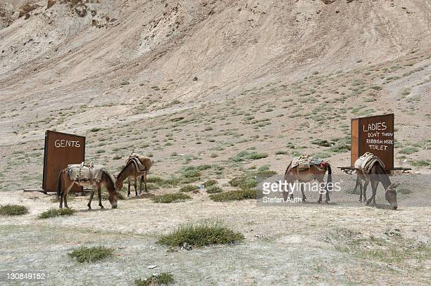 Labeled toilets, gents, ladies, grazing donkeys, Leh-Manali Highway, a mountain pass road, Camp Pang, mountain scenery, Ladakh region, Jammu and Kashmir, India, South Asia, Asia