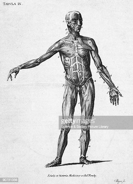 Labelled chromolithograph by Royce showing the muscles in the front of the human body This diagram is from a collection of bookplates and...