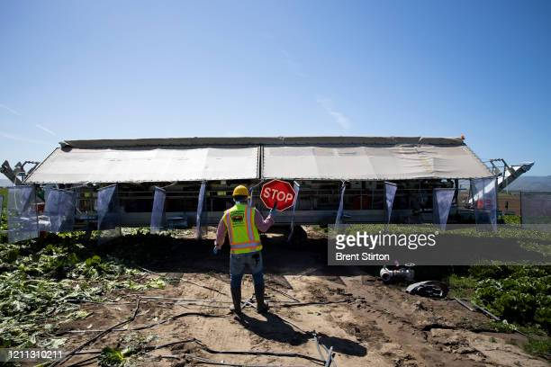 A labor safety supervisor helps rotate a harvesting machine for romaine lettuce on April 27 2020 in Greenfield California Fresh Harvest is the one of...